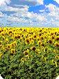 biobrandstof voordelen en nadelen